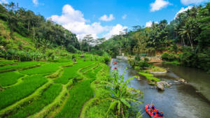 Rice-Field-(6)